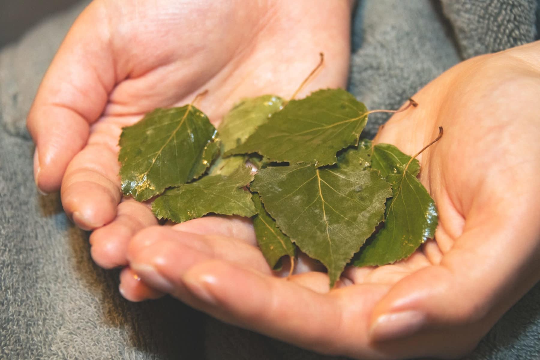 birch tree leaves on hand